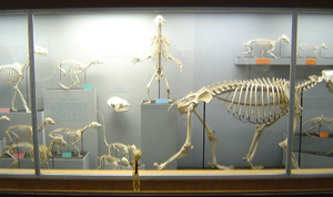 Skeletondisplay